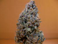 Purple Diesel